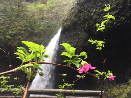 Hiking and Biking: Columbia Gorge Hidden Waterfalls